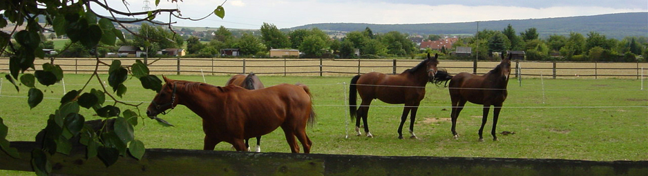 Lemmie-Pferde